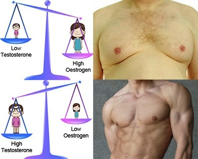 Man Boobs And The Estrogen Testosterone Ratio