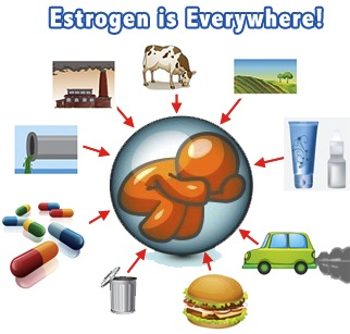Estrogen is Everywhere