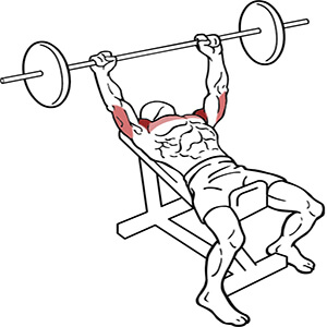 Incline Bench Press Anterior Deltoid Activation