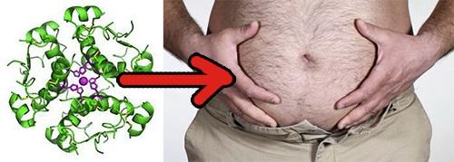 Insulin makes you fat