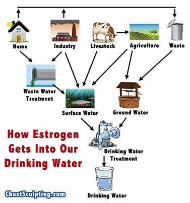 Sources of Estrogen in Drinking Water