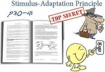 Stimulus Adaptation Principle