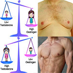 Man Boobs And The Estrogen to Testosterone Ratio