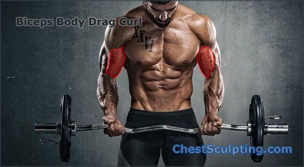 Biceps Body Drag Curl